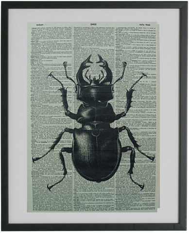 Stag Beetle Print No.296