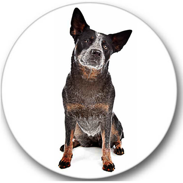 Blue Heeler Dog #3 Sticker Seals No.829