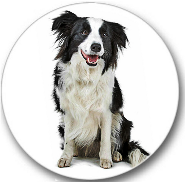 Border Collie Dog #2 Sticker Seals No.833