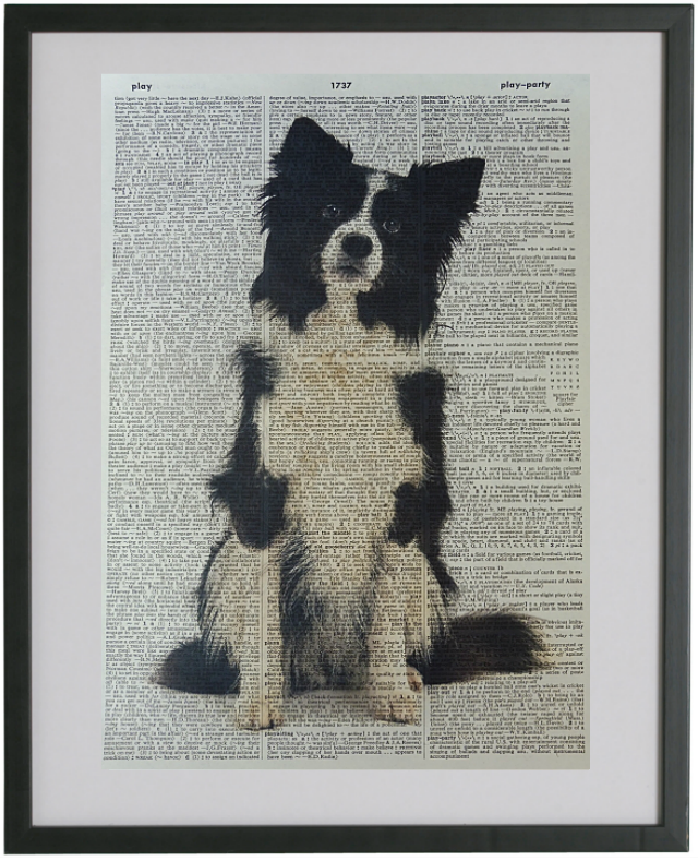 Border Collie Dog #1 Print No.3
