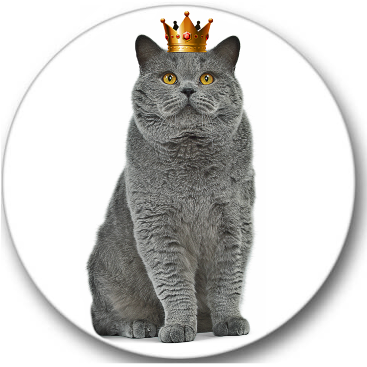 British Shorthair Cat #2 Sticker Seals No.757