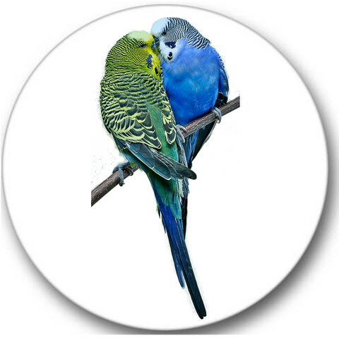 Budgerigar Birds Sticker Seals No.267, bird prints