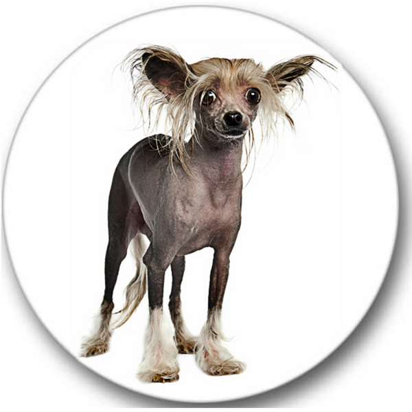 Chinese Crested Dog #2 Sticker Seals No.741