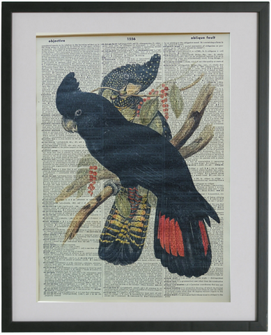 Black Cockatoo Print No.449, bird print