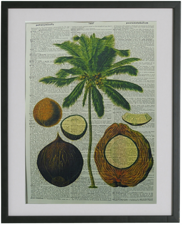 Coconut Tree Print No.253, botanical