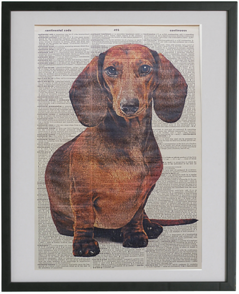 Dachshund Dog Print No.438
