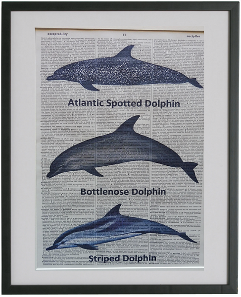 Dolphins Print No.635