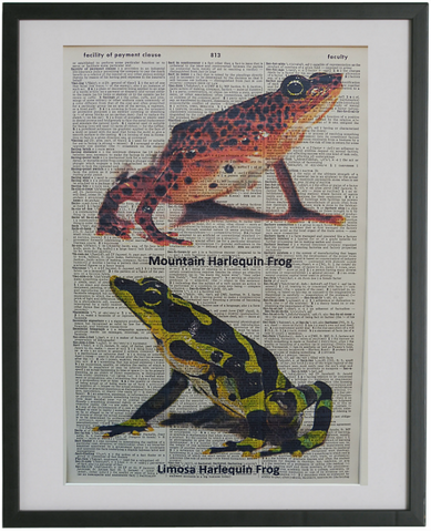 Frogs Print No.559, botanical