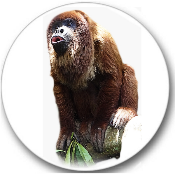 Howler Monkey Sticker Seals No.126, animals