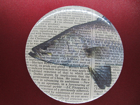 Barramundi Fish #1 Fridge Magnet No.582