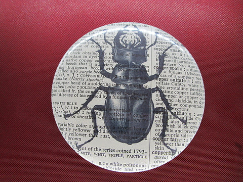 Stag Beetle Fridge Magnet No.296