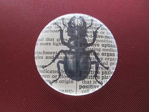 Stag Beetle Button Badge No.296