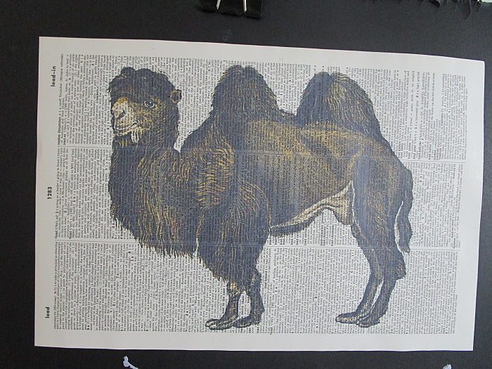 Camel #2 Print No.1041, animals