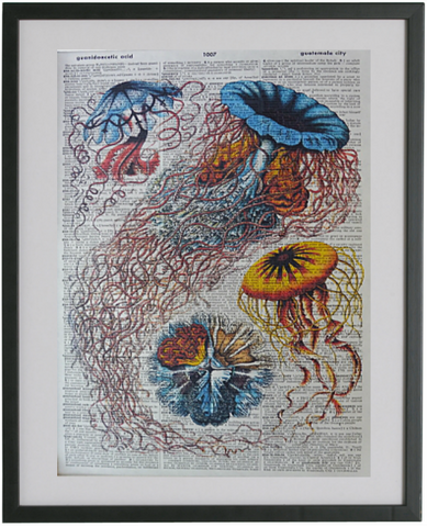 Jellyfish Print No.226