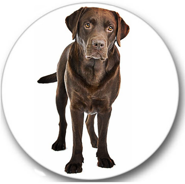 Labrador Chocolate Dog #1 Sticker Seals No.598