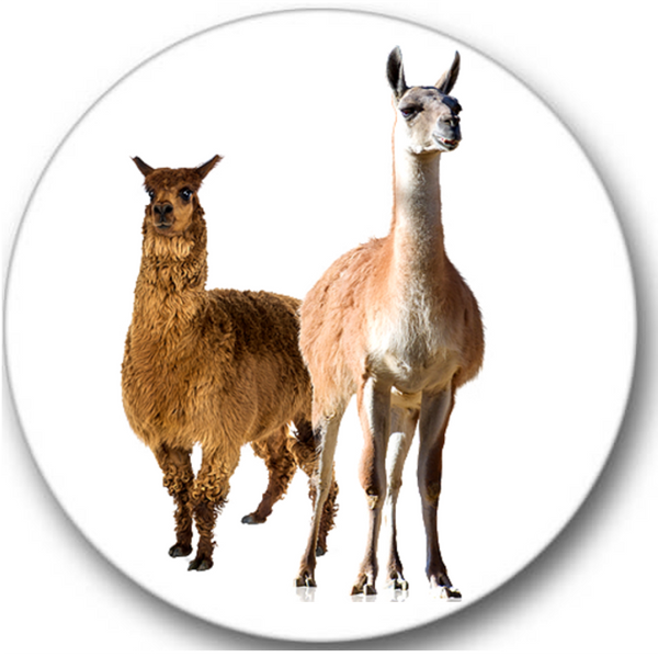 Llama Sticker Seals No.466, animals