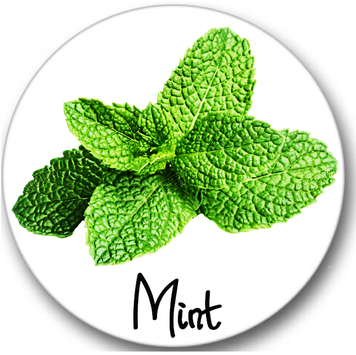 Mint Leaves Sticker Seals No.974, botanical