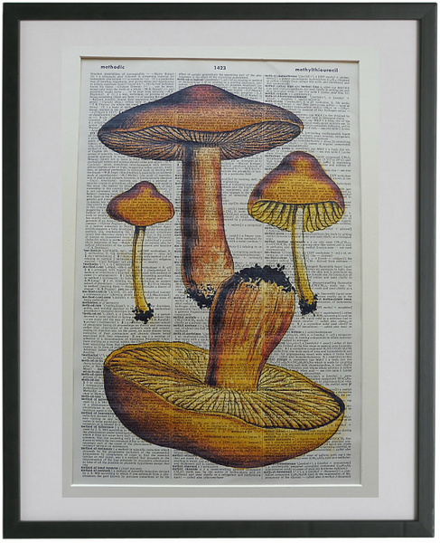 Mushrooms Print No.712, botanical