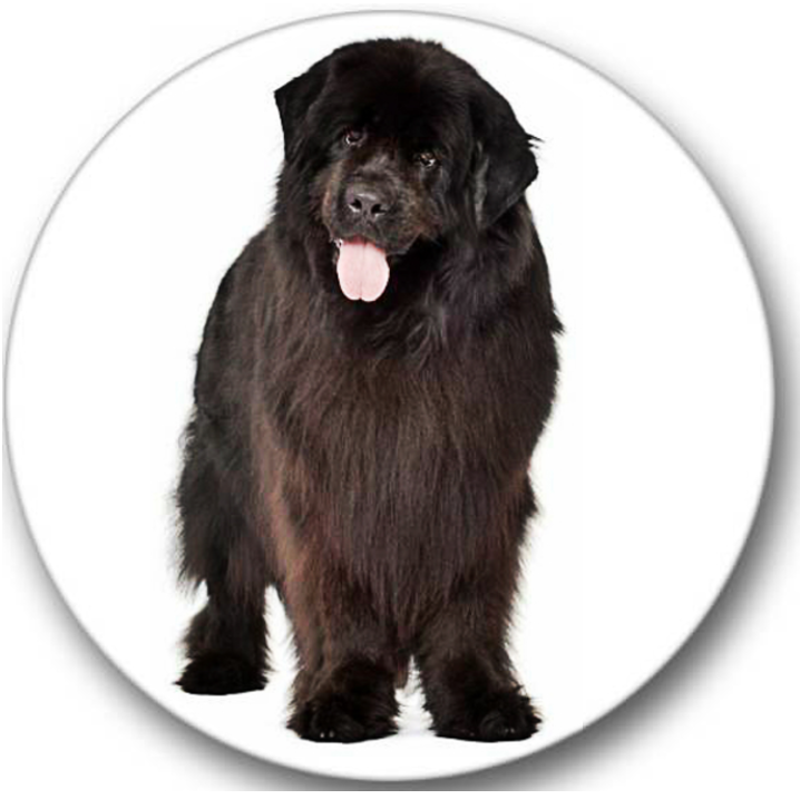 Newfoundland Dog #4 Sticker Seals No.418