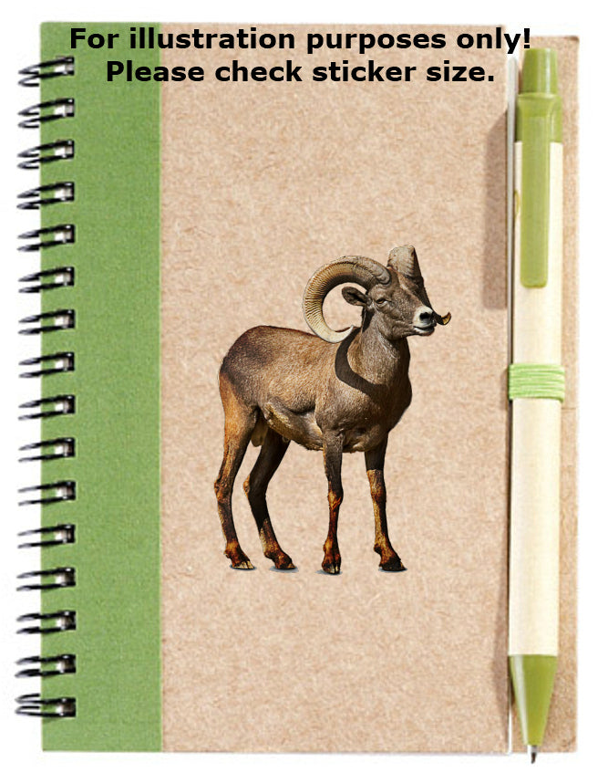 Argali Sheep Sticker No.776, animals
