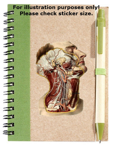 Ear and Throat Anatomy Sticker No.236
