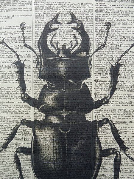 Stag Beetle Print No.296, botanical