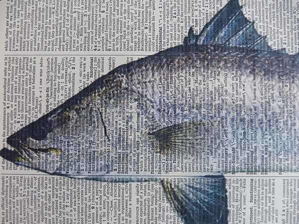 Barramundi Fish Print No.582