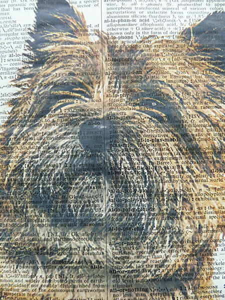 Cairn Terrier Dog #4 Wall Print No.52