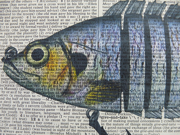 Fishing Lures Print No.41