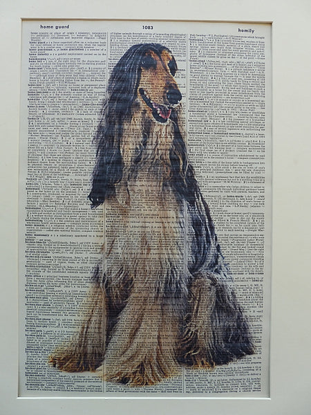 Afghan Dog Print No.708