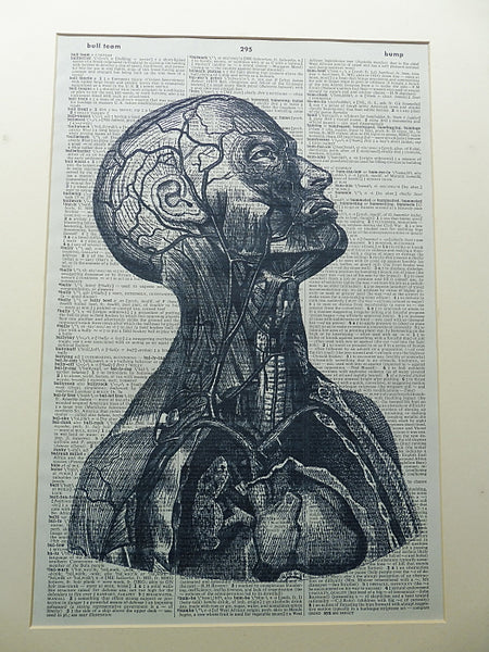 Head and Chest Anatomy Wall Print No.755
