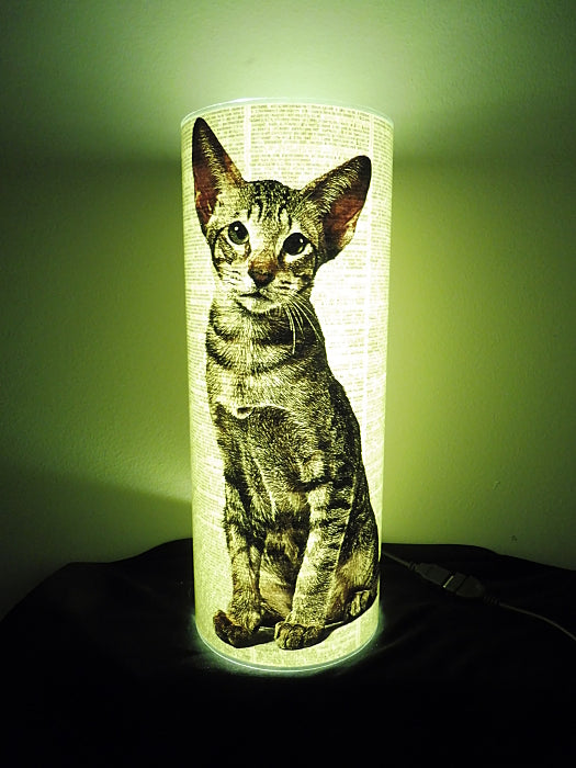 Oriental Shorthair Cat Paper Lantern No.661