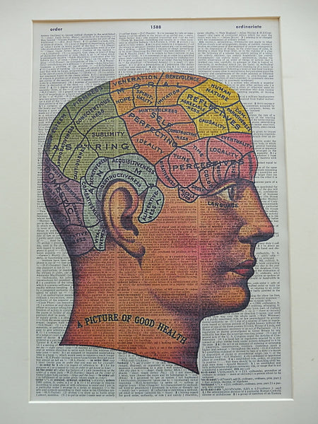 Brain Anatomy Print No.827