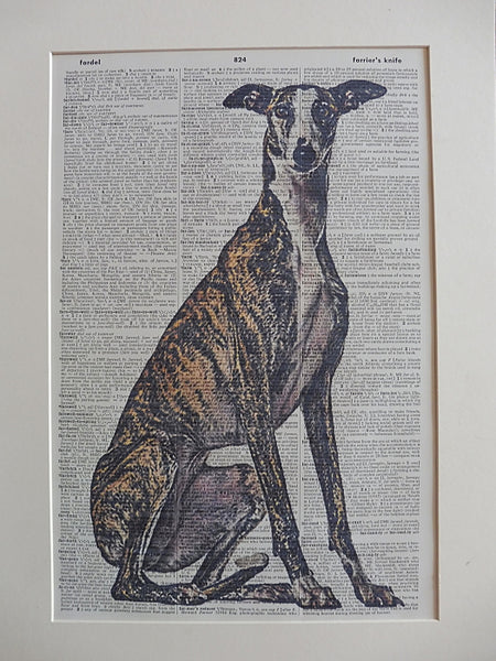 Greyhound Dog #6 Print No.852