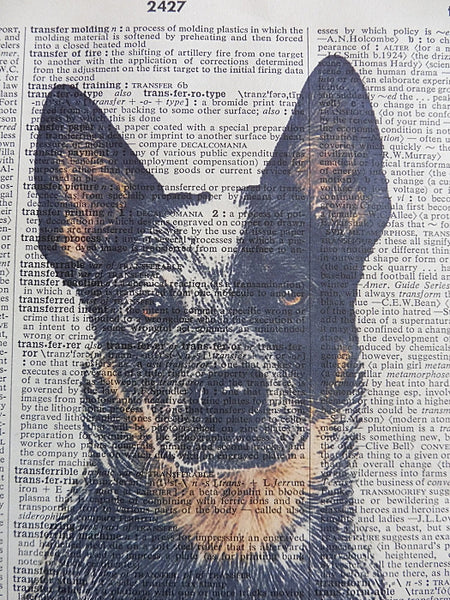 Blue Heeler Dog #4 Wall Print No.783