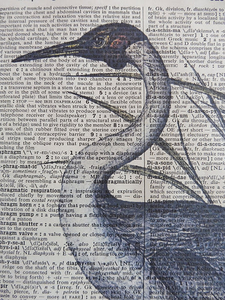 Australian Crane Bird Wall Art No.884, bird print