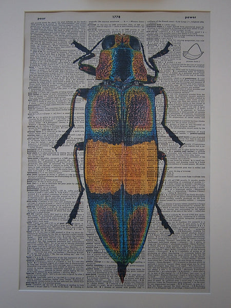 Jewel Beetle Print No.167