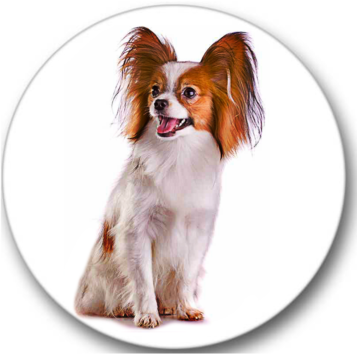Papillon Dog #1 Sticker Seals No.113