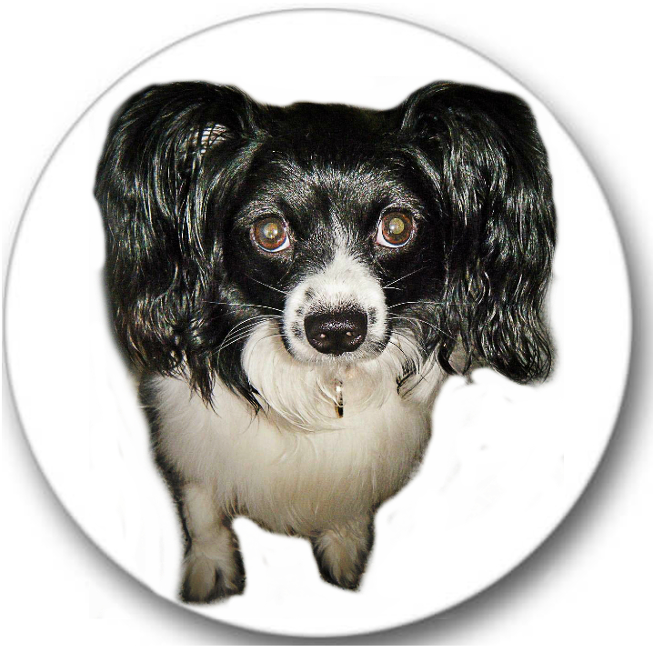 Papillon Dog #2 Sticker Seals No.738
