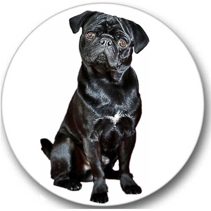 Pug Dog #4 Sticker Seals No.433