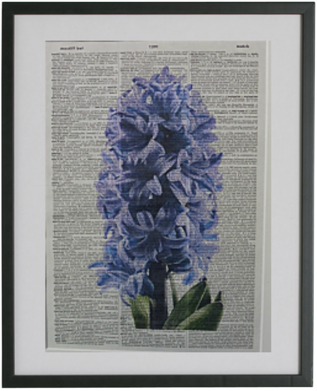 Hyacinth Flower Print No.72, botanical