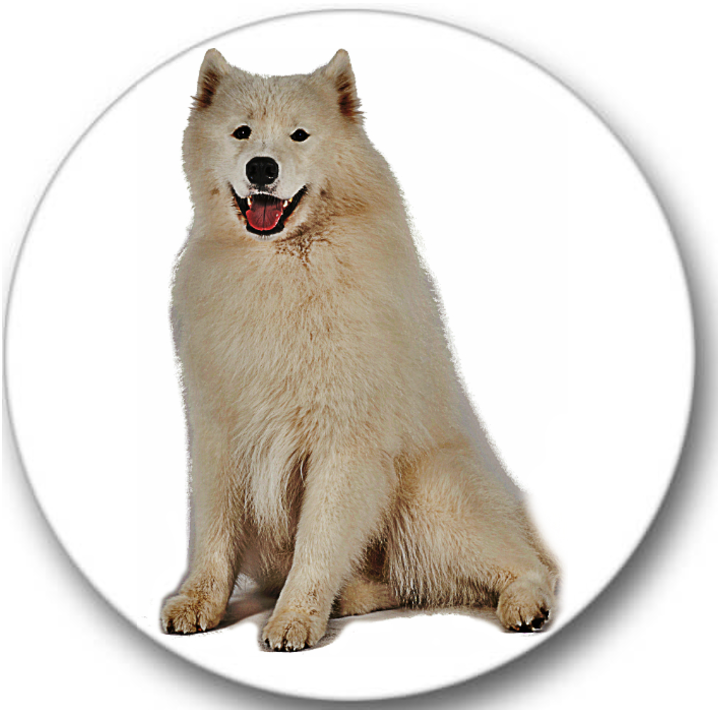 Samoyed Dog Sticker Seals No.402