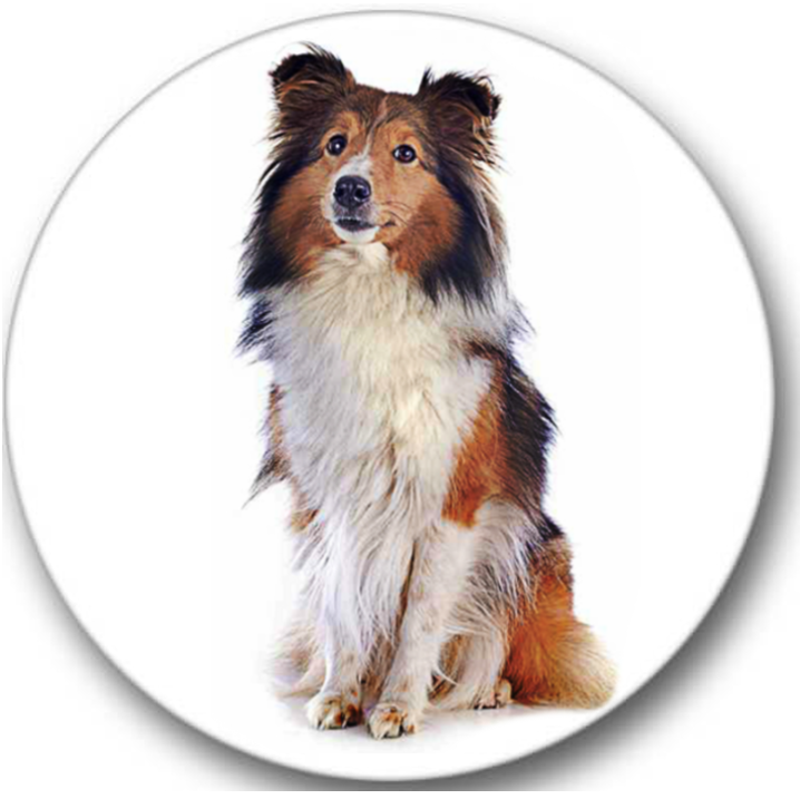 Shetland Sheepdog Sticker Seals No.59