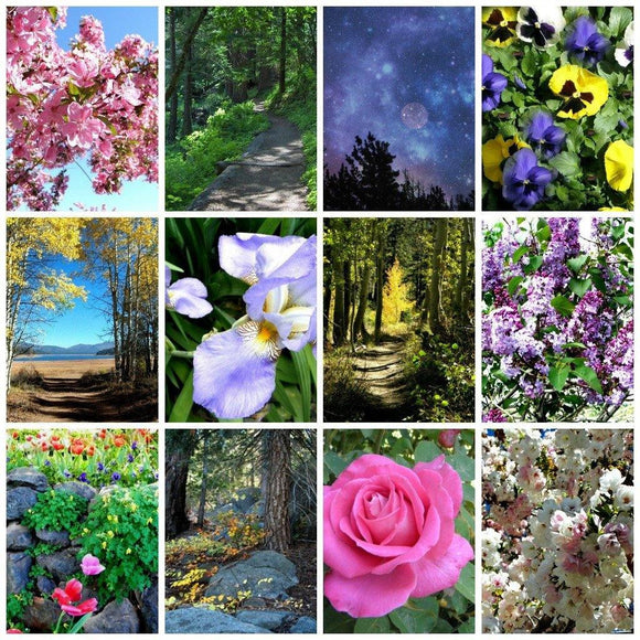 Assorted Nature Cards: 12 piece set; by PonsART $39.95 - PAMELA'S ART by PonsART - a Gift Shop and Marketplace