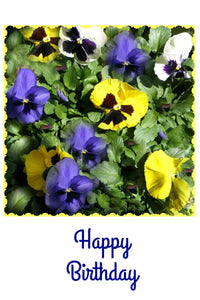 Pansy Greeting Cards: 4-piece sets by PonsART $19.95 - PAMELA'S ART by PonsART - a Gift Shop and Marketplace