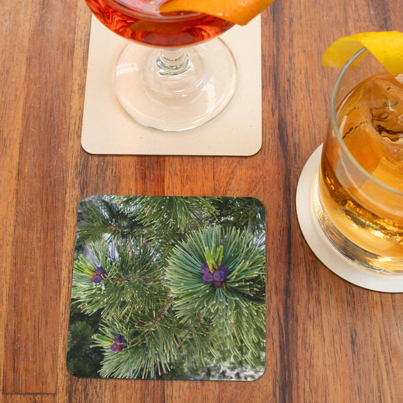 Pine Green Coasters: 4-piece set from PonsART $20.00 - PAMELA'S ART by PonsART - a Gift Shop and Marketplace