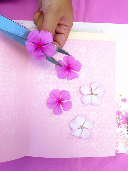 How to press flowers greetings of grace insert your folded papers in a book and then close it let the book sit for around 5 10 or to make it press faster add some more books on top of it mightylinksfo