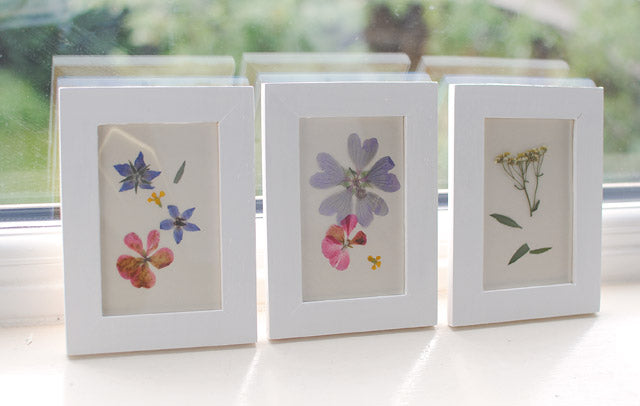 Framed Pressed Flower Art by Gwen McMullin
