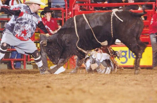 Rank Bull Bull Fighting