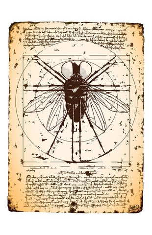 Art Print featuring 'Vitruvian Fly' by Lucie B